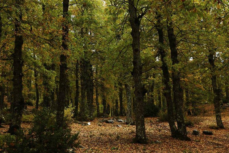elezer forest HkiliAanBaladi LebanonStories tourism tours ...