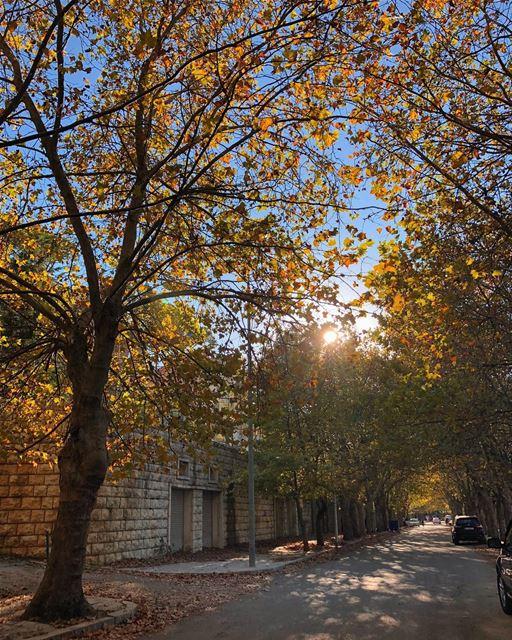Good morning from dreamy Sawfar🍂🍁 livelovebeirut automn instamood ... (Sawfar, Mont-Liban, Lebanon)