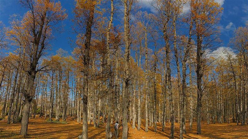🍁 Spot Her 🍁.. forest trees orange fall outdoors hiking ... (Fnaïdek, Liban-Nord, Lebanon)