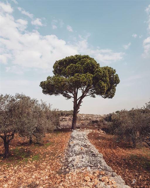 simple but different 🌳.. livelovelebanon nature beauty sky... (Bterrâm, Liban-Nord, Lebanon)