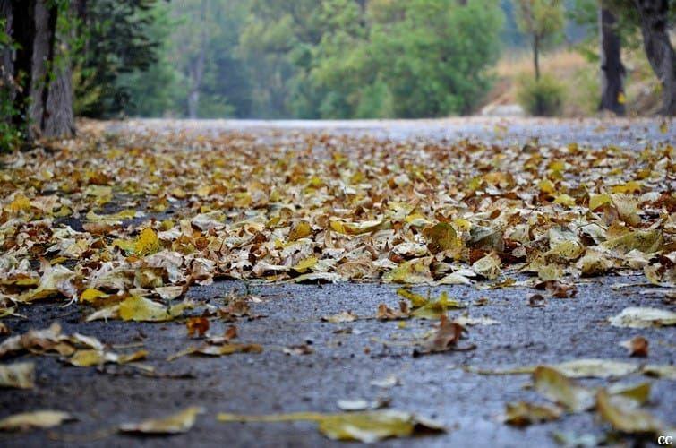 lebanon autumn season colors fallenleaves whatsuplebanon ...