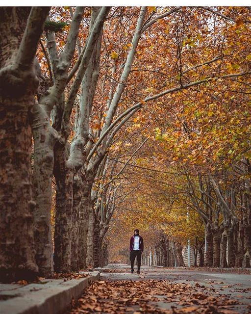 Morning walk by @alidaher89 🍂 There is a harmony in autumn, and a luster... (Sawfar, Mont-Liban, Lebanon)