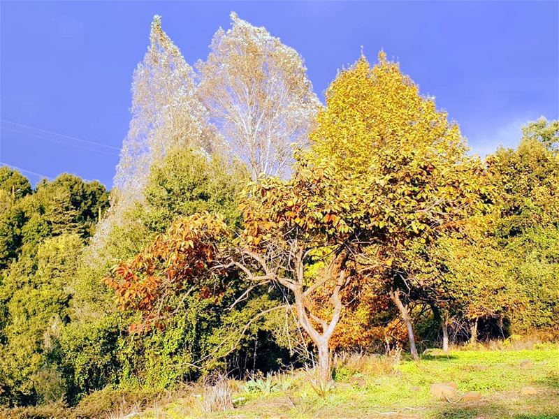 nature lebanonnature trees forest ... (Ghbalé, Mont-Liban, Lebanon)