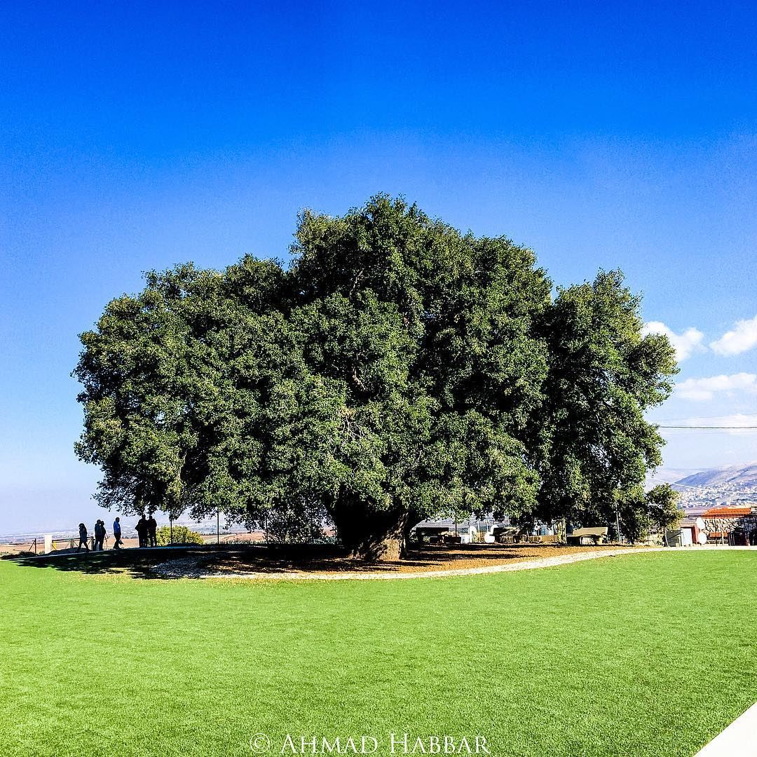Life tree treeoflife trees oldtree life nature oak bogtree green... (Khirbet Qanafâr, Béqaa, Lebanon)