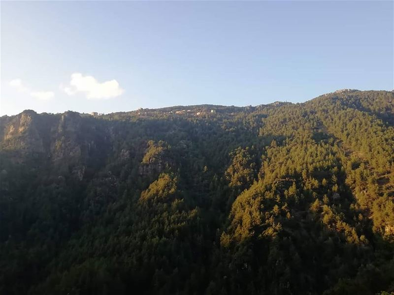 Up for a hike in JabalMoussa this weekend?Call us at 71-944405 for more... (Jabal Moussa Biosphere Reserve)