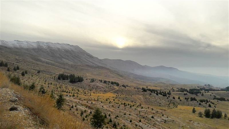 Let's hope in a better tomorrow........... lebanon cedars ... (El Arz, Liban-Nord, Lebanon)