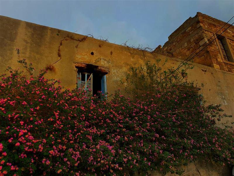 oldhouses oldhouse jbeil byblos ... (Jbail, Mont-Liban, Lebanon)
