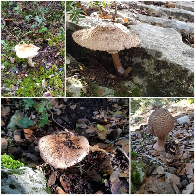 The sudden appearance of mushrooms after rain is one of the more... (The Forest)
