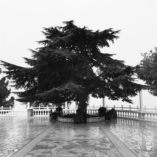 ‎ independeceday lebanon bw blackandwhite bnw lebanonindependenceday ...