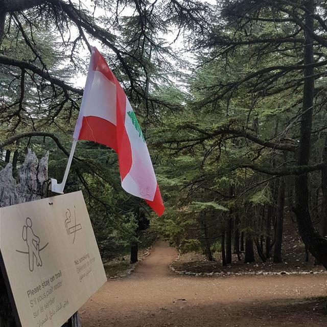 كلنا عالوطن🎶🎶🎶عفوا للوطن🎵🎵 ig_respect instaamici ig_lebanon ... (Al Shouf Cedar Nature Reserve)