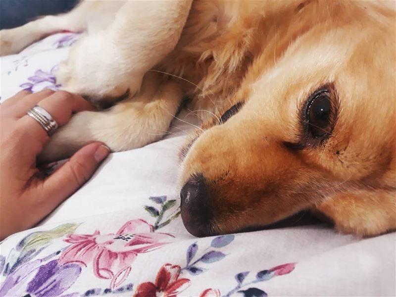 When i needed a hand, I found ur paw 🐾🐶🐾 ilovemydog  honey ...