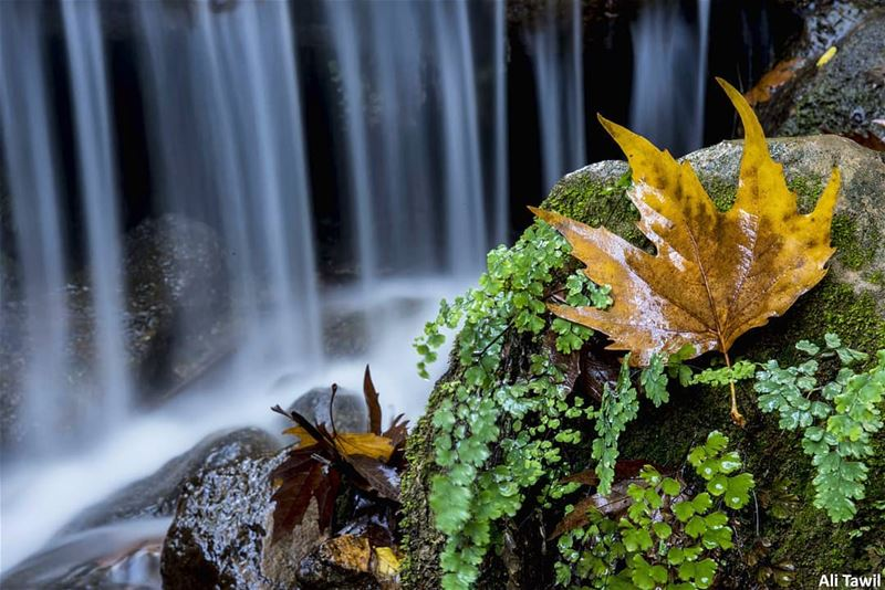 🍁 autumn  longexposure  beautiful  waterfall  nature  naturephotography ... (West Bekaa)