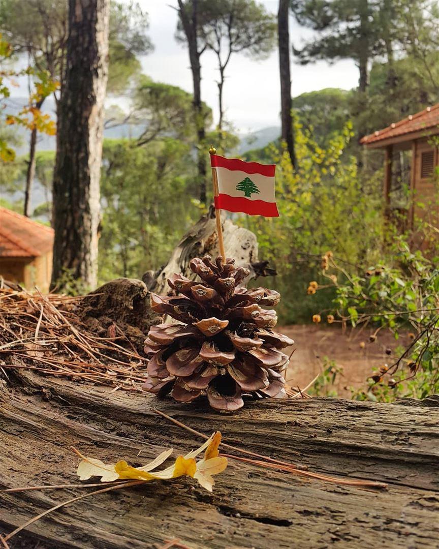 Happy Independence Day Lebanon🇱🇧 LaMaisonDeLaForet Lebanon ...