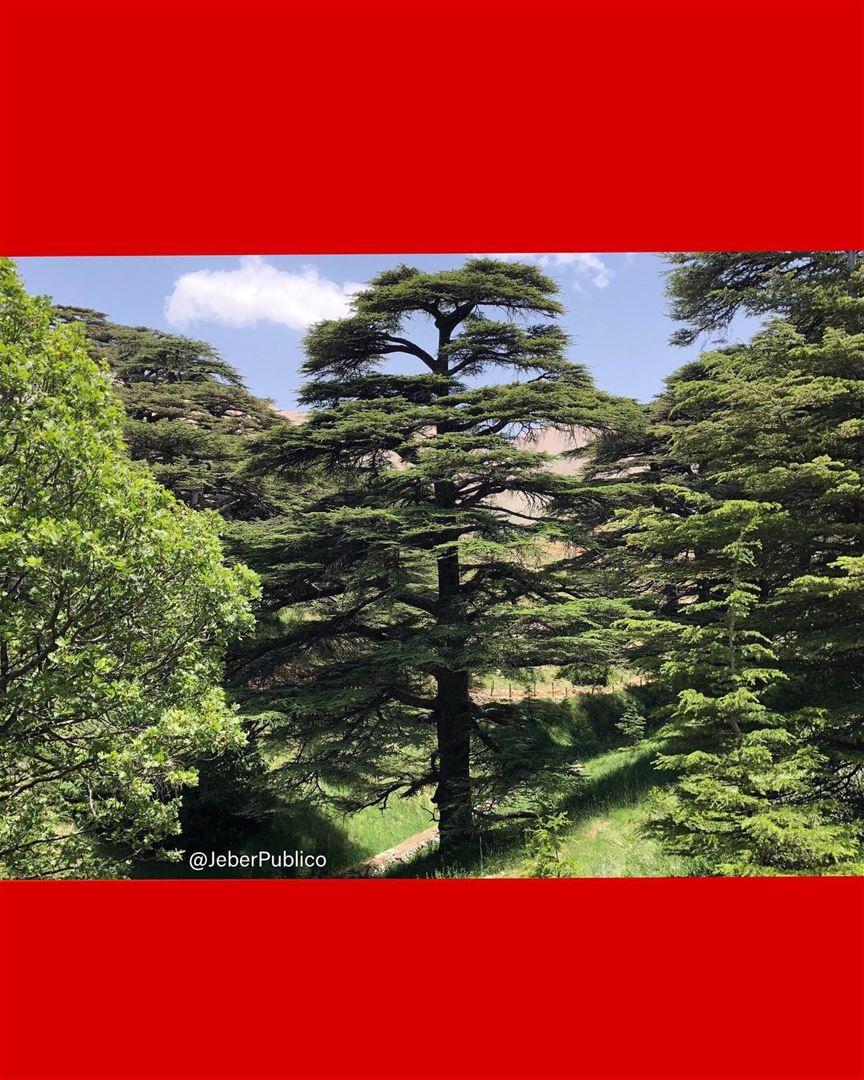 🇱🇧 Una foto que capture meses atrás en los Cedros De Dios en Bcharre. Vi... (Bcharreh, Liban-Nord, Lebanon)