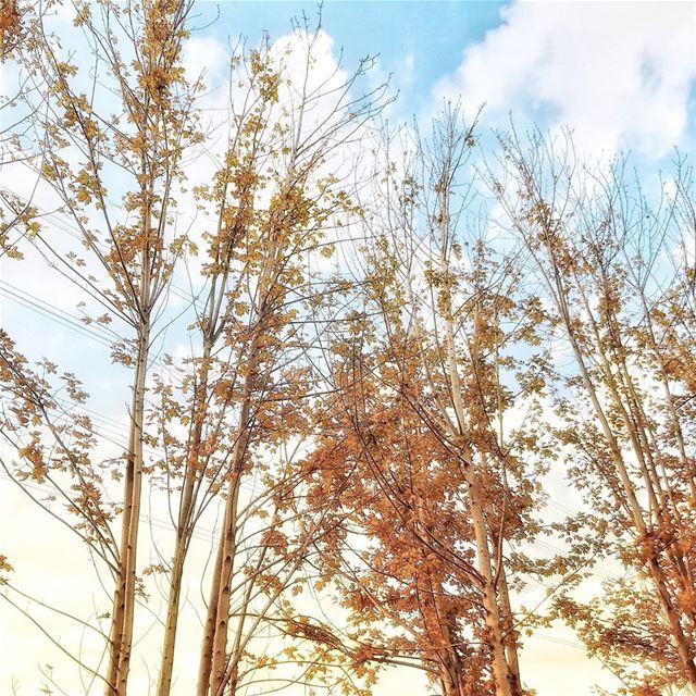 saturday saturdayvibes sunny sky saturdays saturdayfun nature ... (Zouk Mosbeh)