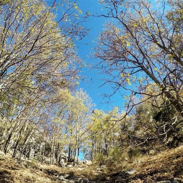"Every Friday is ""Green Friday"" in JabalMoussa. unescomab unesco ... (Jabal Moussa Biosphere Reserve)"