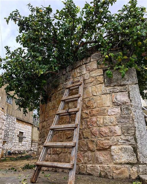 yaroun  yarounday  village  lemontree  southlebanon  livelovesouth  ...