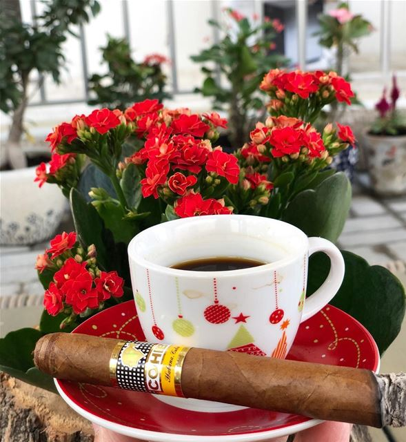 Christmas 🎄 spirit.... photooftheday christmas flowers cigar cigars... (Al Ajman)
