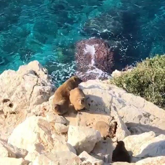 """إكتشاف حيوان """"الوبر الصخري"""" على شواطئ الناقورة. 🦔انه من المخلوقات المثير (Naqoura)"""