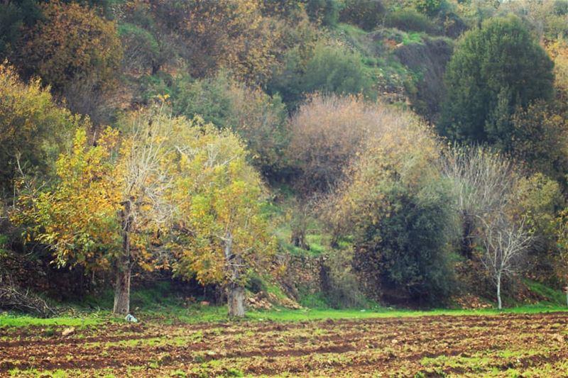 autumn🍁 spirit hermel hermel_city bekaa lebanon_pictures ... (El Hermel, Béqaa, Lebanon)