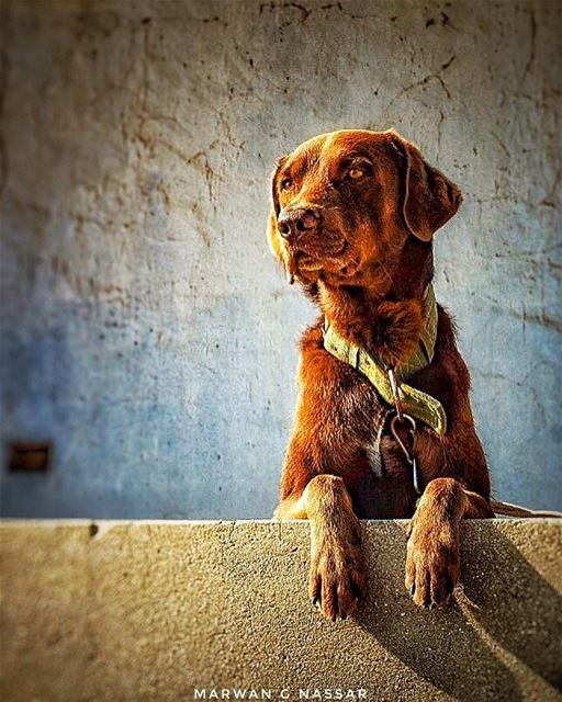 Sun Kissed 🐶 ... anfeh lebanon enfeh dogsofinstagram dogs ... (Anfeh Al-Koura أنفه الكورة)