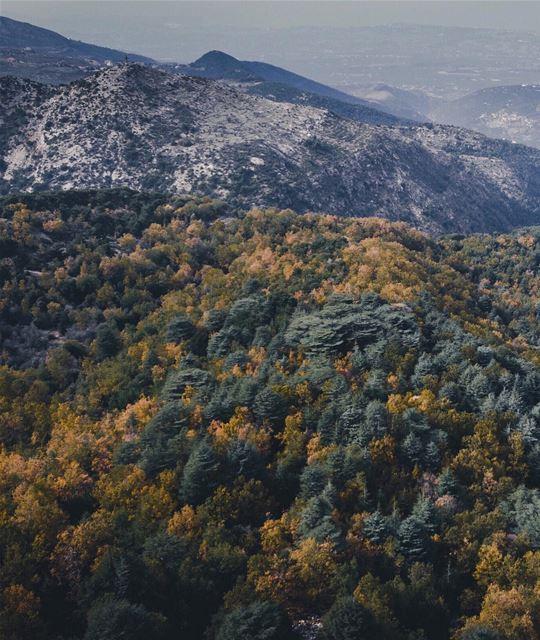 Autumn from above 🚁 (Lebanon)
