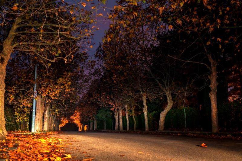 Les feuilles mortes se ramassent à la pelle..••• YvesMontant ... (Sawfar, Mont-Liban, Lebanon)