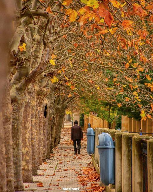 قدر بأن نمضي مع الأيام أغرابا نطارد حلمنا.. و يضيع منا العمر يا عمري.. و نح (Sawfar, Mont-Liban, Lebanon)