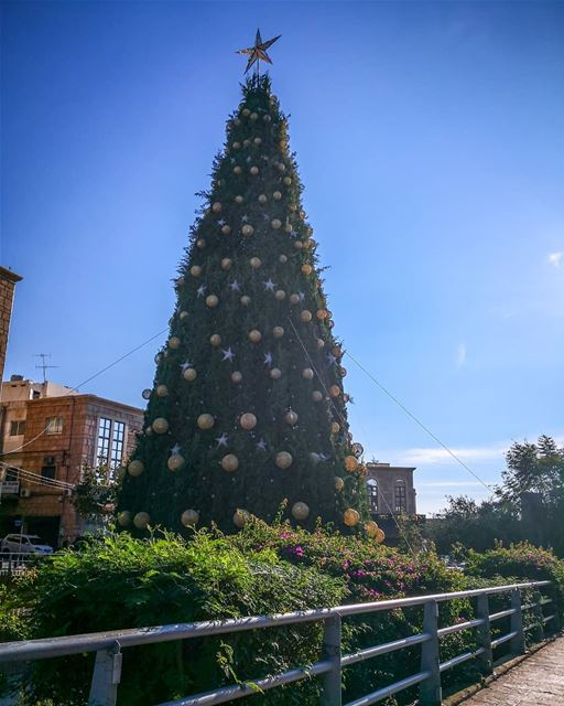 ________________________________________ libanon byblos christmastree... (Byblos - Jbeil)