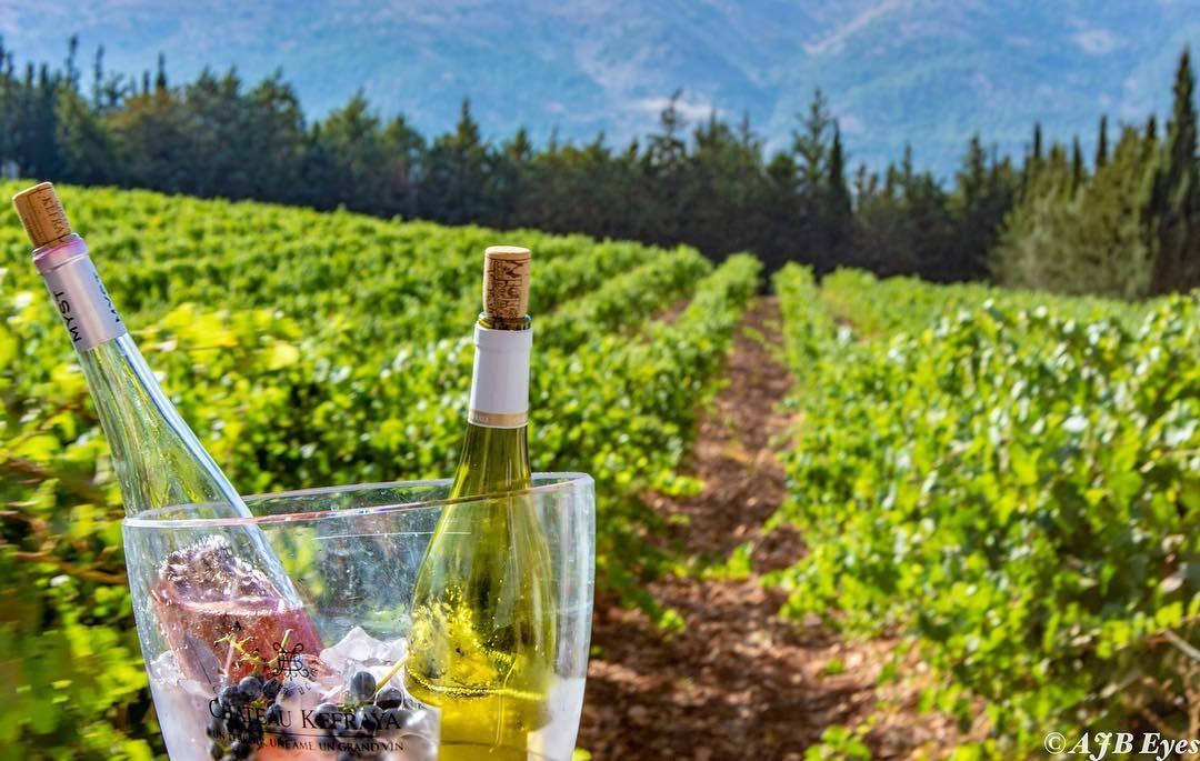 "Wine is bottled poetry. ""Robert Luis Stevenson "". @chateaukefraya_officiel... (Chateau Kefraya)"