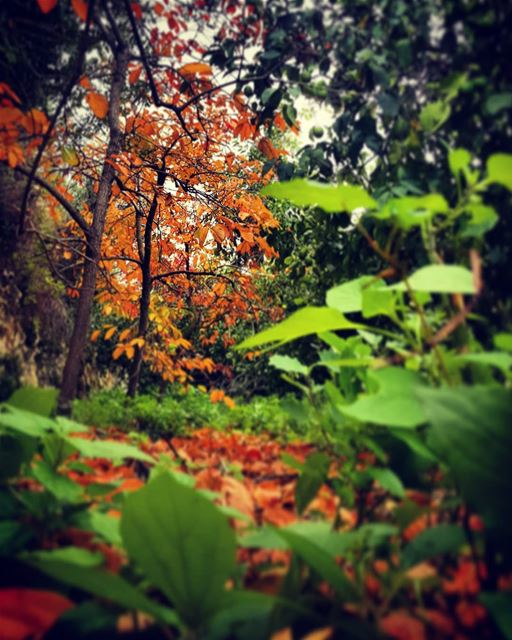 _Fallen leaves_ autumn  autumnleaves  autumncolors  autumn🍁  fallen ...