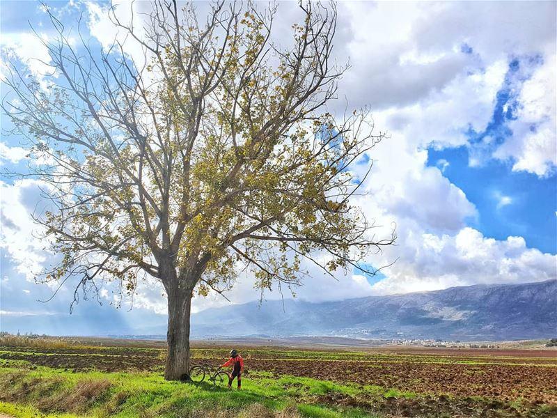 Tree Of Life🍃.... mtblove cyclinglife naturelove tree mtb ... (`Ammiq, Béqaa, Lebanon)