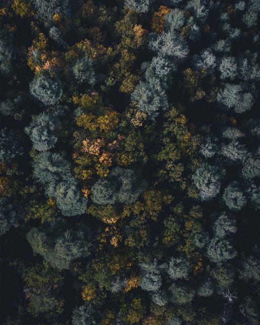 Forest flights 🌲 (Lebanon)