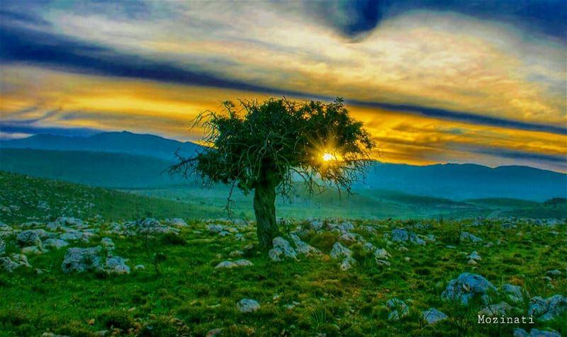 و ما صبابةُ مُشتاقٍ على أملٍمن اللقاءِ كَمُشتاقٍ بلا أملِ و الهجرُ أقتلُ... (Lebanon)