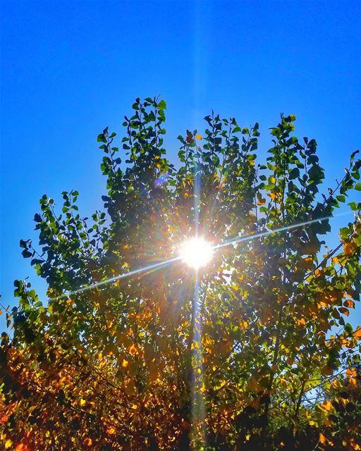👌☀ sun rays 👍📷 LEBANON/AKKAR/berkayel♡ - 27/11/2018...