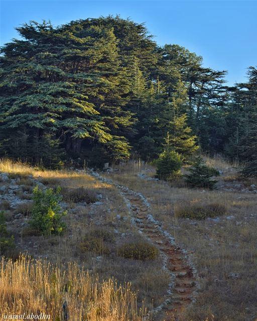ليس بإمكانك السير على طريق أي شخص آخر ، لأن ذلك الدرب لن يوصلك إلى ذاتك ، إ (Aïn Zhalta, Mont-Liban, Lebanon)