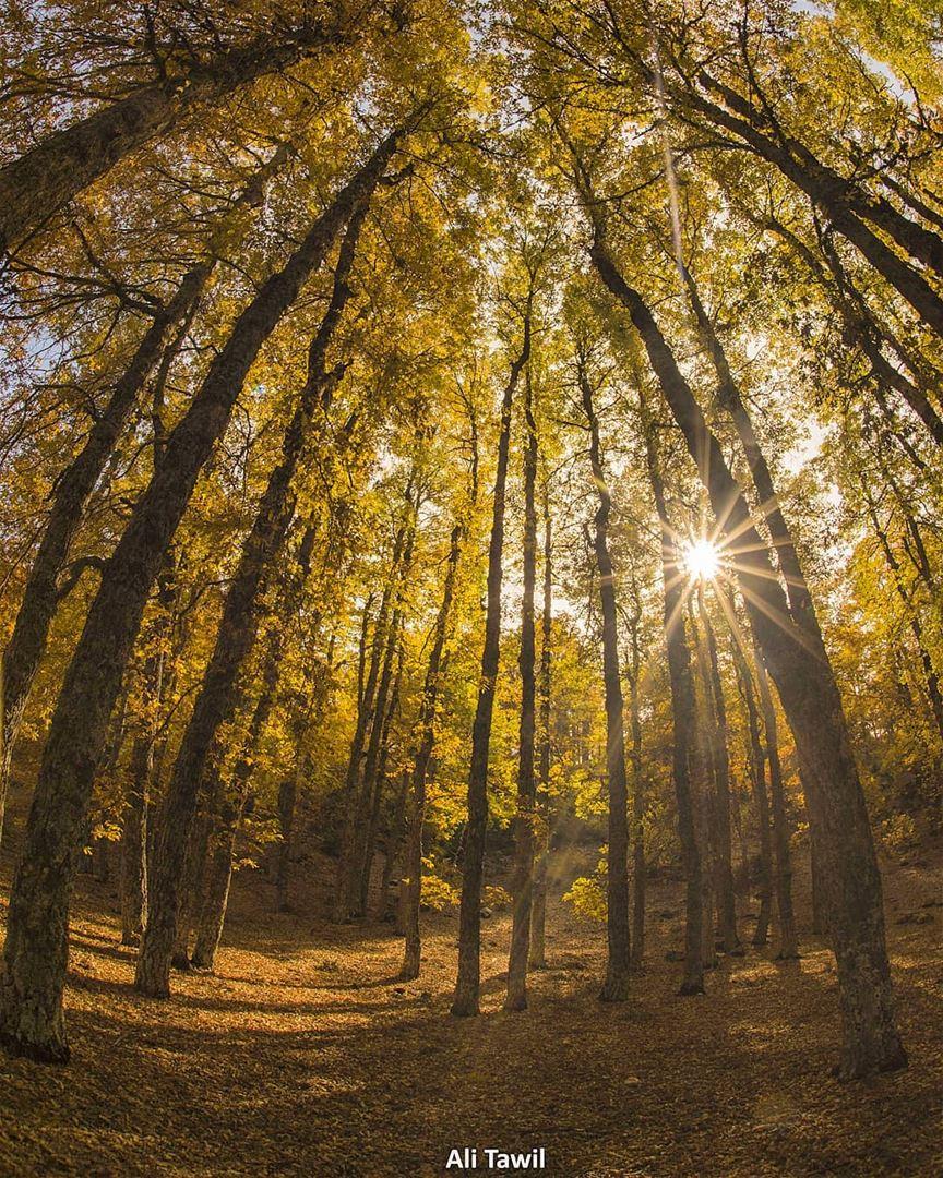 ☀️🍁🍁 nature naturephotography autumnseason autumn lebanon leaves ... (El Qâmoûaa, Mont-Liban, Lebanon)