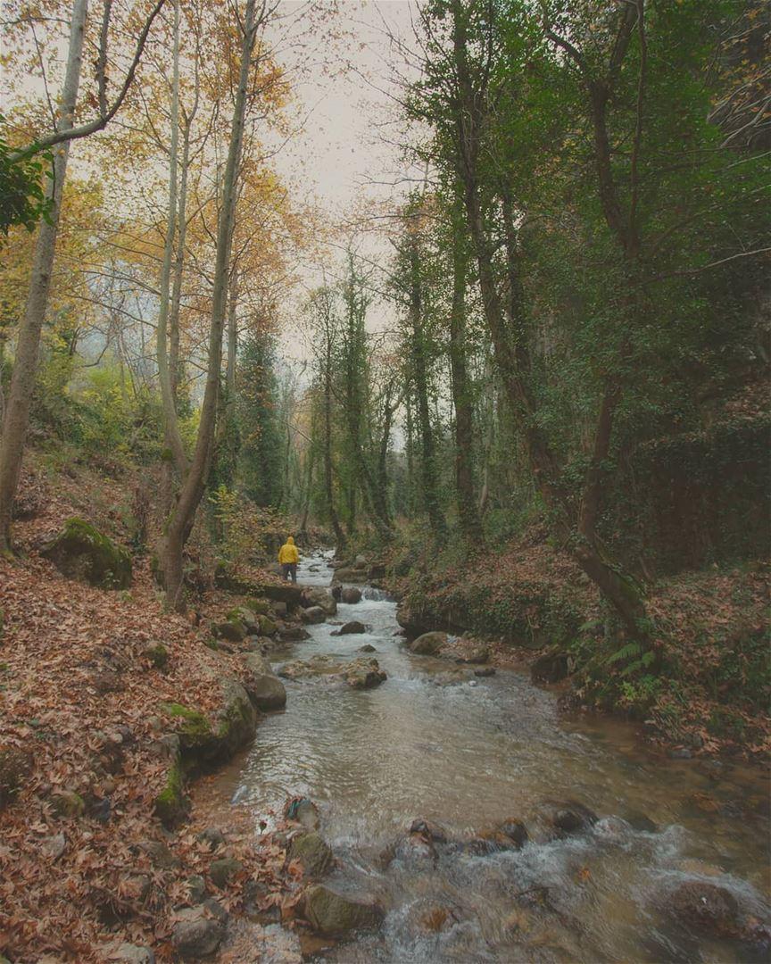 Faded fall 🍁📸 @mikhaelbitar. fall autumn canon river Nature ... (Ouâdi Qannoûbîne, Liban-Nord, Lebanon)