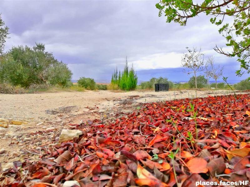 كنتُ شارداً إحدى المرّات بلونِ السّماء..فبعثرتني ألوان الخريف التي عُكِسَت... (Ghassâniye, Al Janub, Lebanon)