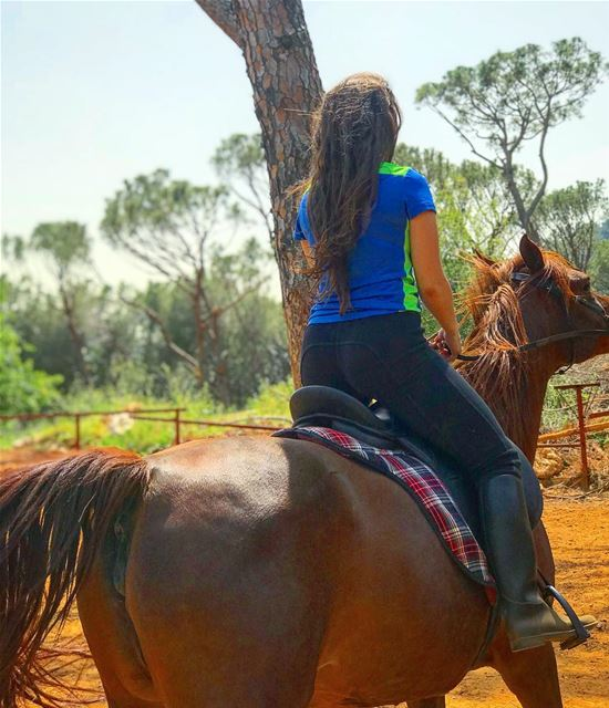 الحصان العربي 🏇🏼 One of the oldest breeds ArabianHorse ••••• WAHO ... (Beit Meri, Mont-Liban, Lebanon)