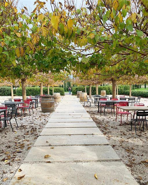 Enjoying fall days at Ixsir winery @ixsirwine 🇱🇧..... ... (Jran, Liban-Nord, Lebanon)
