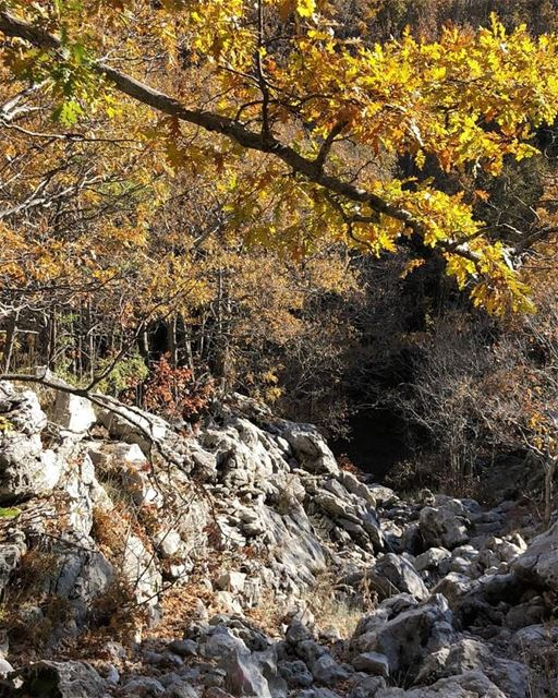 How beautifully leaves grow old...  JabalMoussa unescomab  unesco ... (Jabal Moussa Biosphere Reserve)