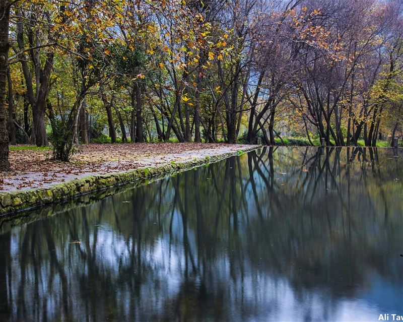 🍁 nature naturephotography reflection autumnseason autumn ... (Akkar)