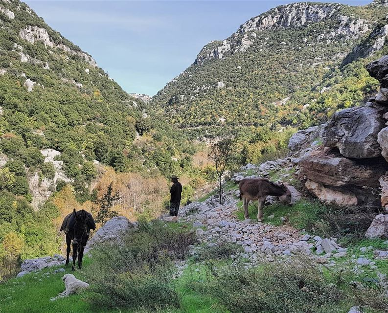 hiking nature naturephotography mountains autumn shepherd lebanon🇱� (Wadi El Salib - Kfardebian)