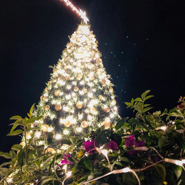 The best so far! Bravo  Jbeil. An  ecofriendly  christmastree...•••... (Jbail, Mont-Liban, Lebanon)