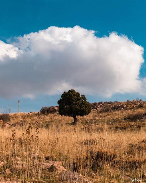 🌳☁️..... landscape landscapephotography photographer... (Qamou'aa)