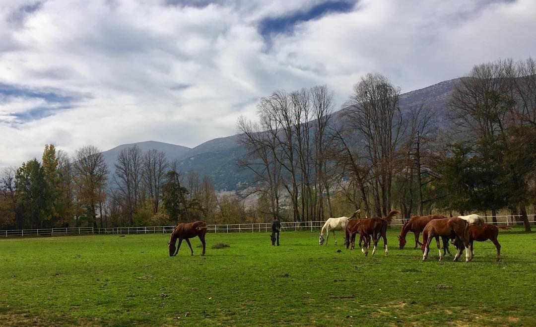 landscape outdoors walk nature horses sundayfunday weekendvibes ...