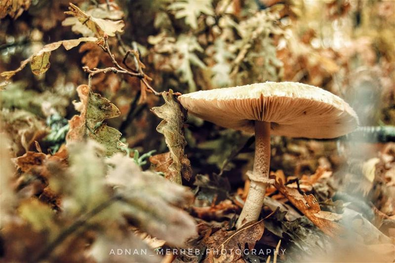 Mushroom 🍄 😍Autumn ❤️🍂🍁 fall  autumn  leaves  socialsteeze  falltime ... (Akkar)
