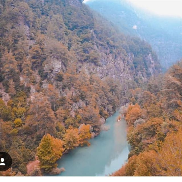 These fall colors... JabalMoussa@jamie.azarr unescomab unesco ... (Jabal Moussa Biosphere Reserve)