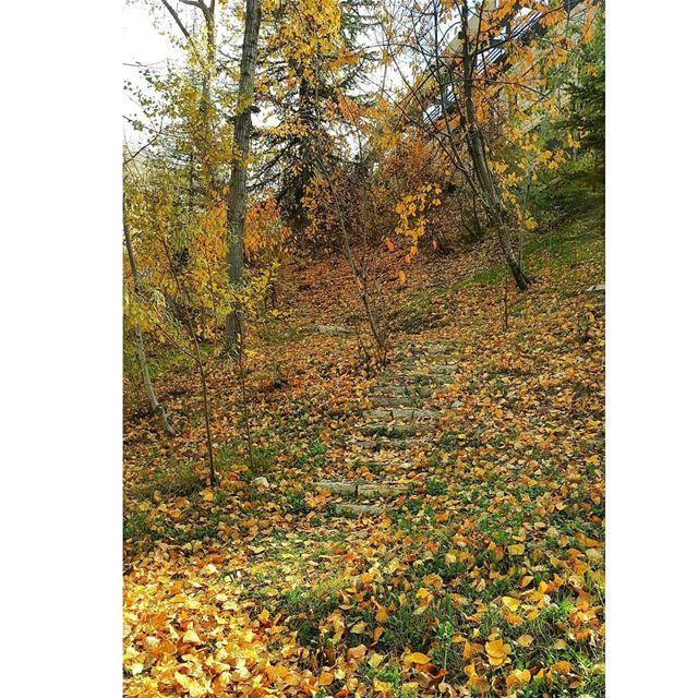 Autumn Mood!🍁... ------------------------------------------------------ (El Laqloûq, Mont-Liban, Lebanon)